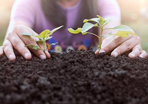 teaser_klein_urban_gardening_NEU_500x350